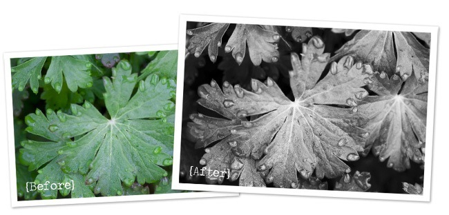 leaf before and after